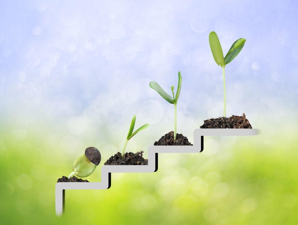 Een trap met een plant die groeit